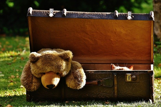 A teddy bear in a suitcase.